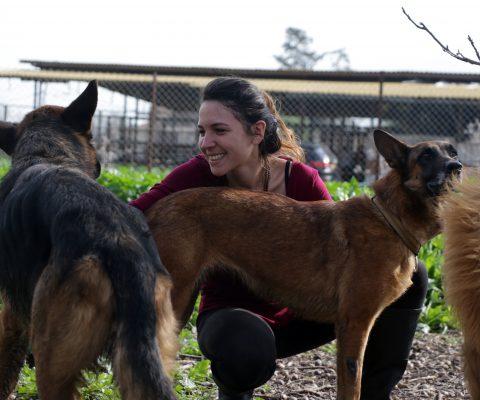הגר ושני כלבים