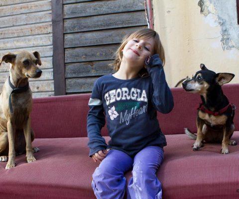 ילד ושני כלבים
