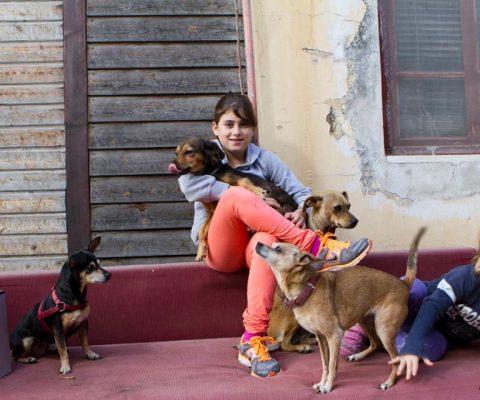 שני ילדים וארבעה כלבים